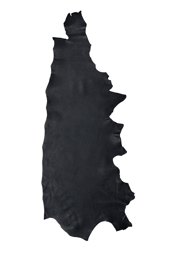 American Bison Black Hide